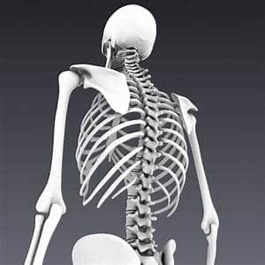 Курс анатомия для массажистов (кости) в Санкт-Петербурге
